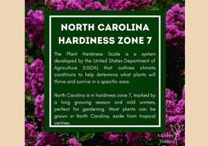 north-carolina-hardiness-zone-7